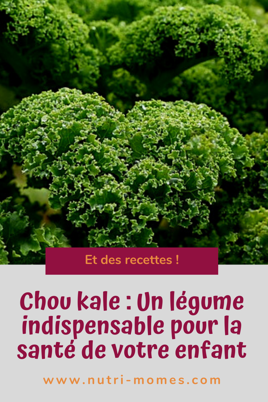 chou kale : recettes et propriété